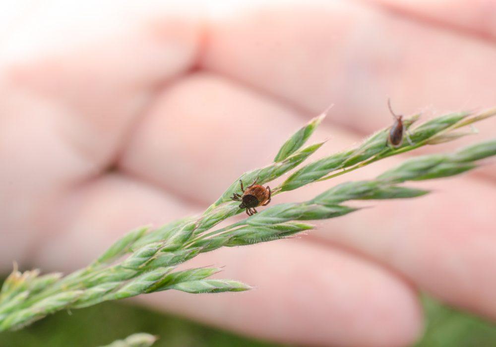 malattia di Lyme risalente
