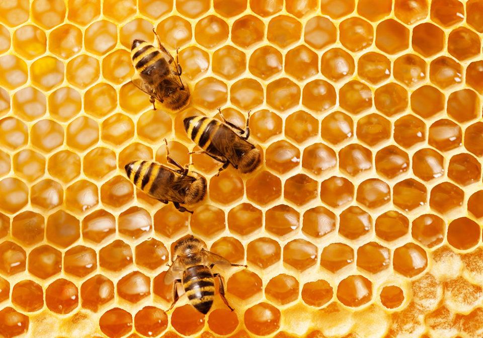 World Bee Day 2021, 20 mila specie di api in pericolo