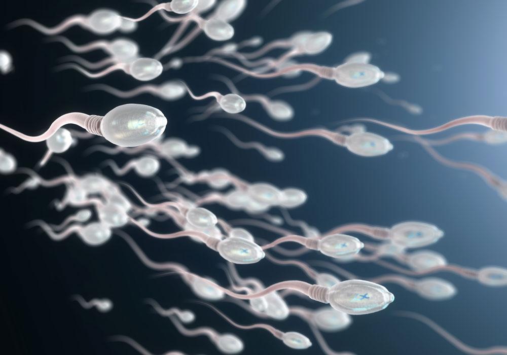 La corsa degli spermatozoi simulata al computer